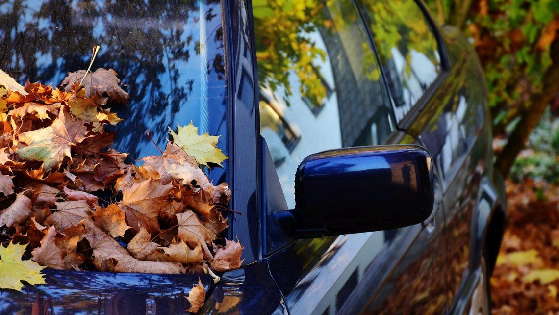 Carreteras hojas de los árboles