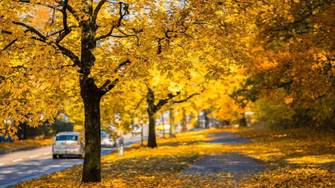Conducir en otoño 2